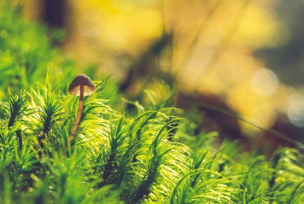 Pequeno cogumelo crescendo na floresta